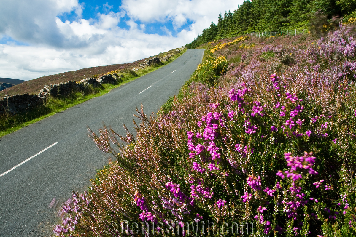 Road along Lough Tay